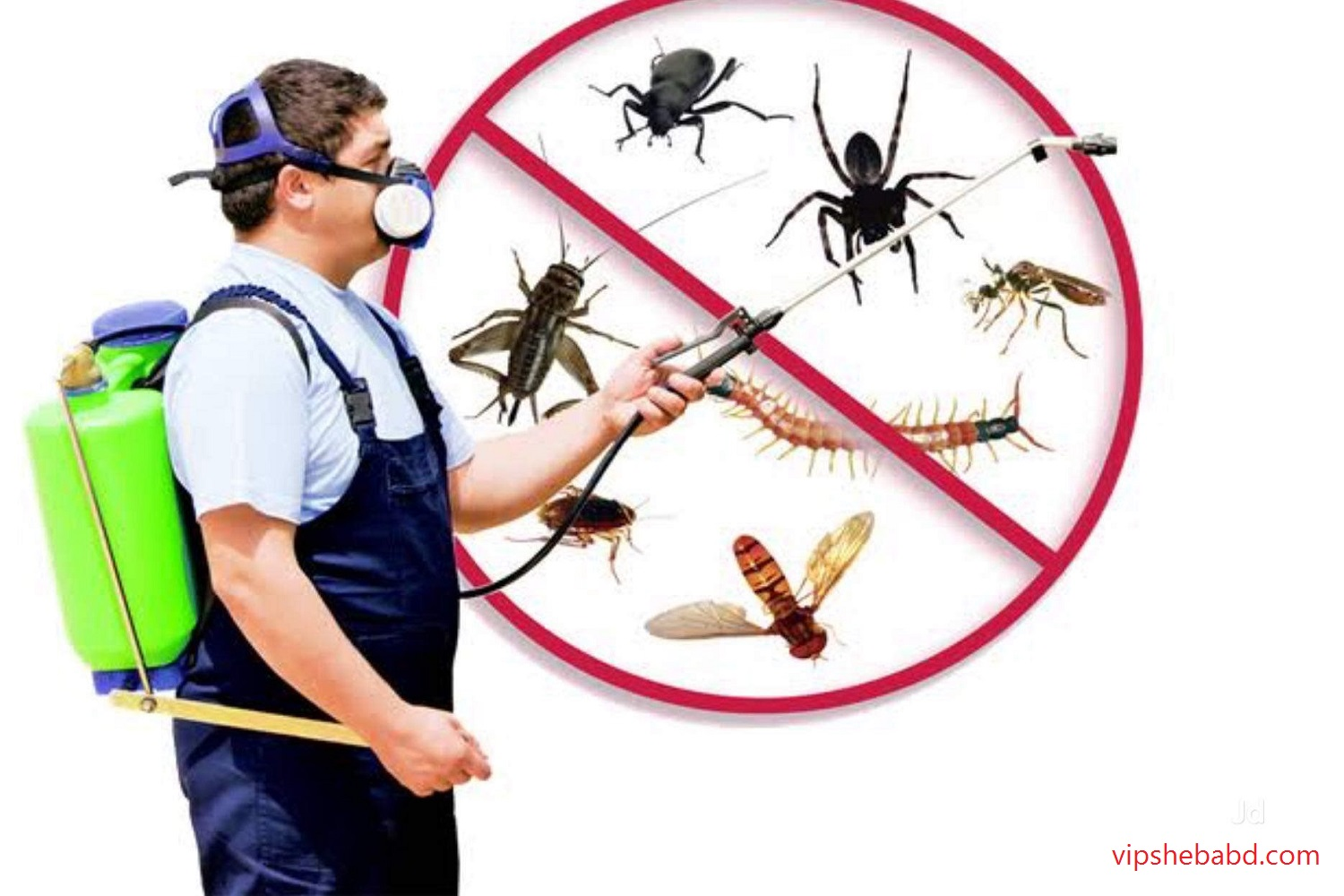 Pest control in Dhaka City